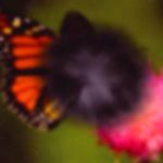 macular-degen