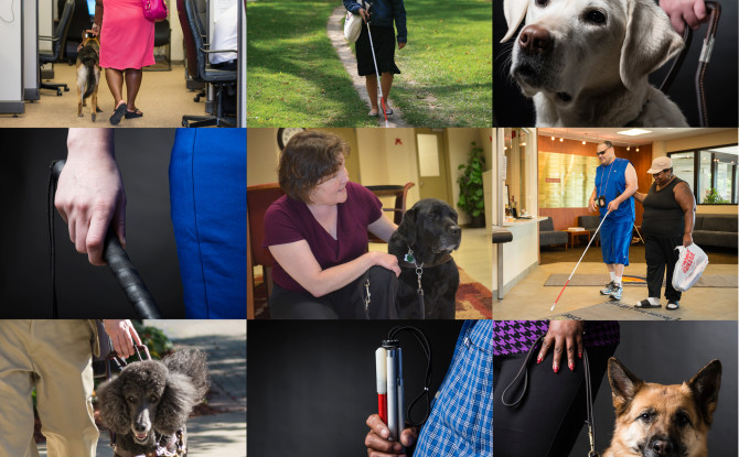 Cane vs. Dog: Which Is Better for the Blind?