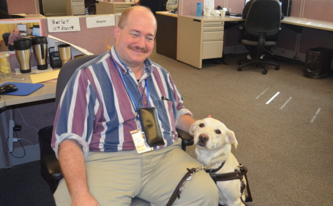 Guest Commentary: Fake Service Animals Are Not the Problem